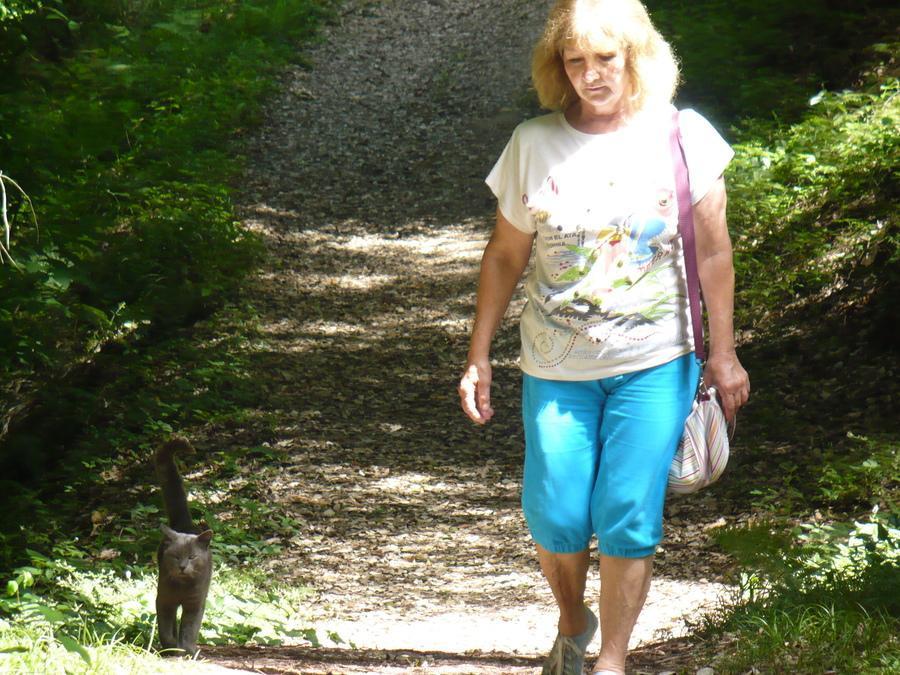 в походе с котом