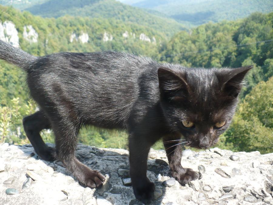 бесстрашный чёрный котейка