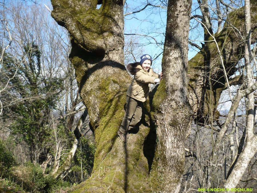 у старого дерева