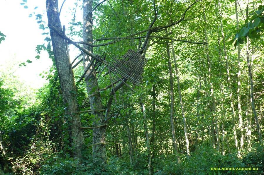 шалаш на дереве, или ?