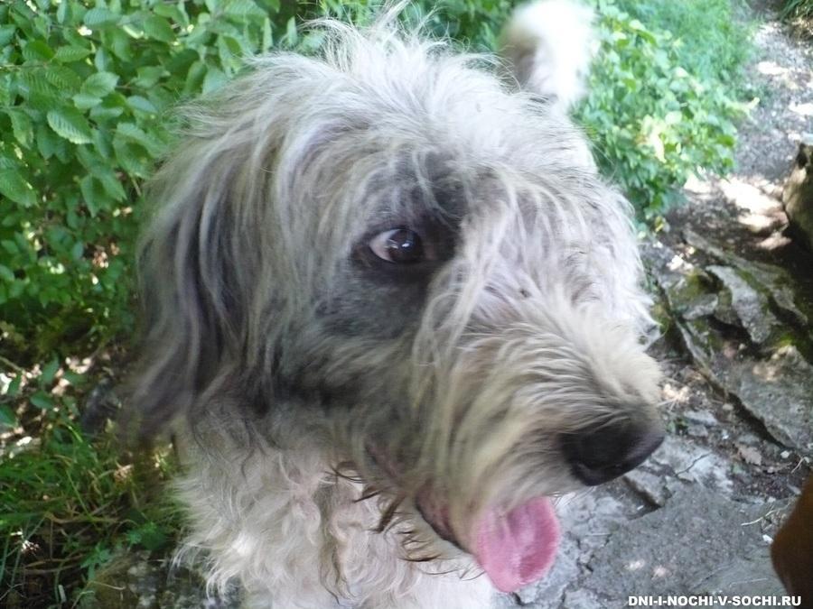 пёс - Барбос