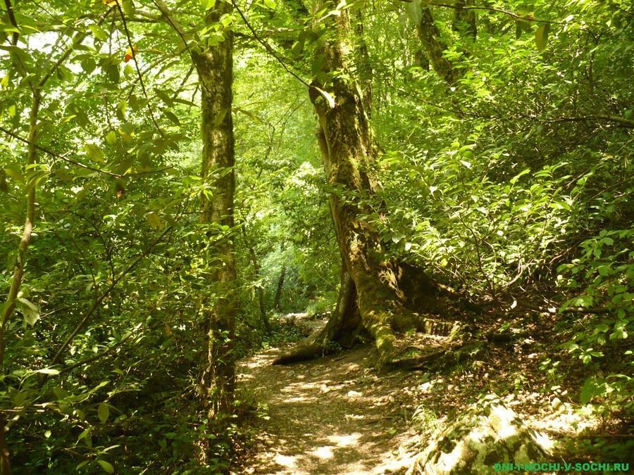 Тропинка в Агурском ущелье
