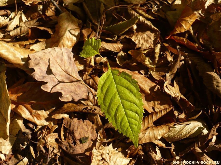 зелёный листочек