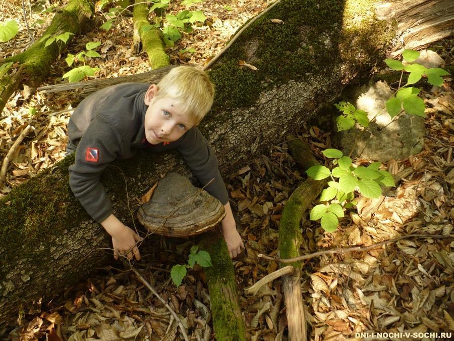 фото с древесным грибом