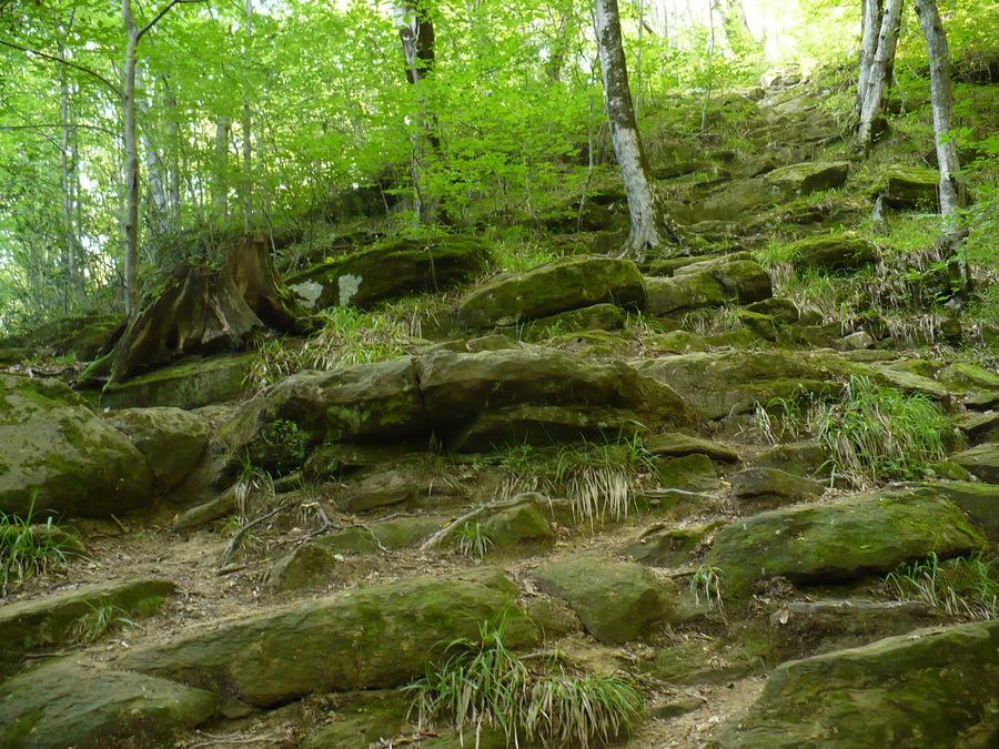 лес у Волконского дольмена