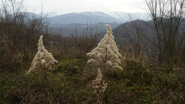 гора Овсянникова