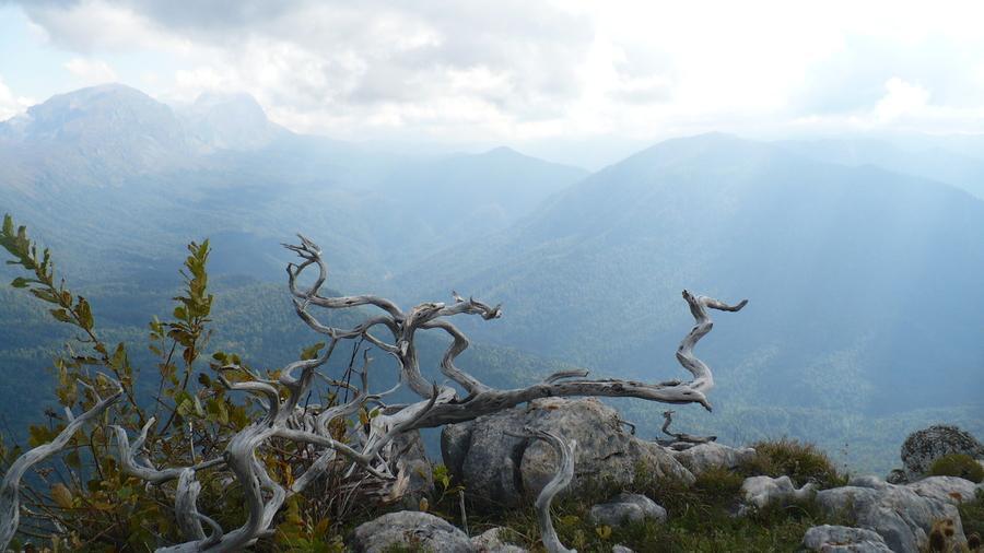 гора Спящий черкес можевельник