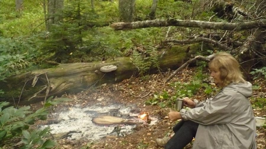 в хвойном лесу