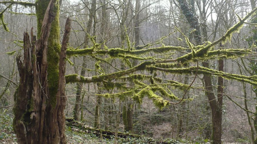 в сочинских лесах