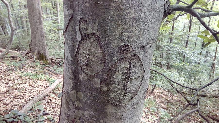 метки в лесу