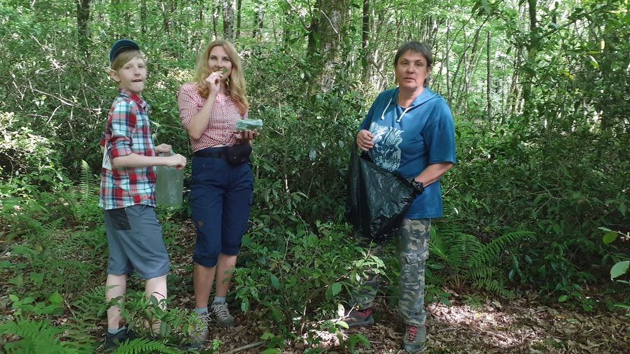 Мацестинский чай в лесу