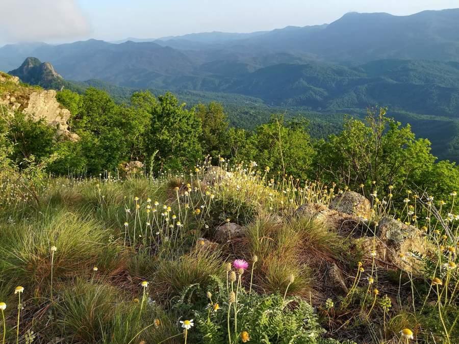 у подножья горы Семашхо