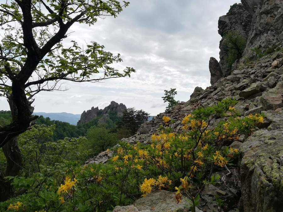 гора Индюшка