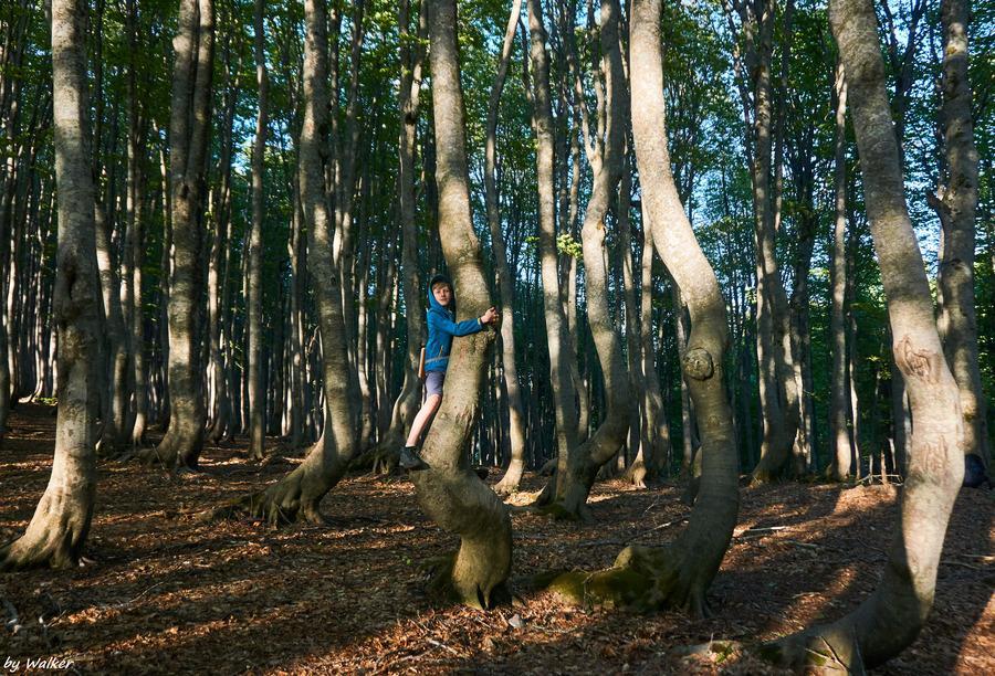 деревья дают силу