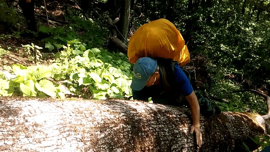 завал из деревьев