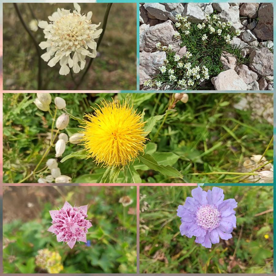 растения Западного Кавказа