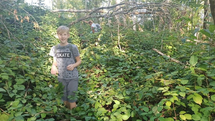 заросли субтропического сочинского леса