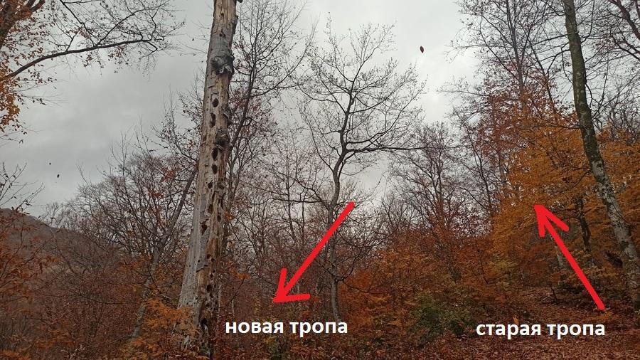 дерево - ориентир