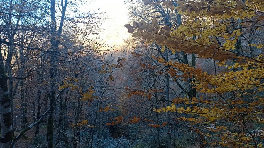 утро в сочинском лесу