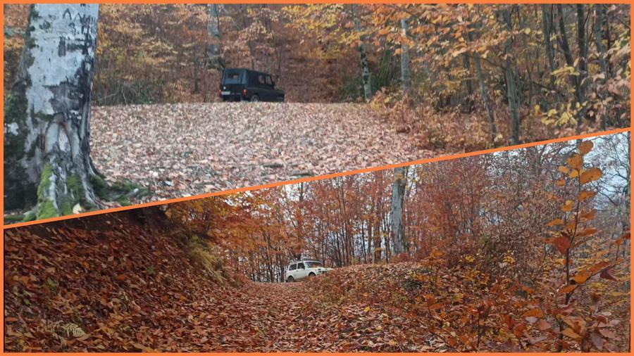 автомобили в лесу