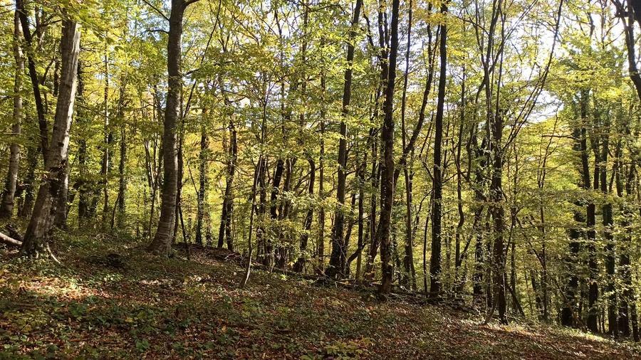 Лес в Сочи в ноябре