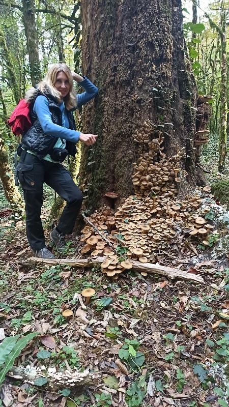 Где собрать грибы