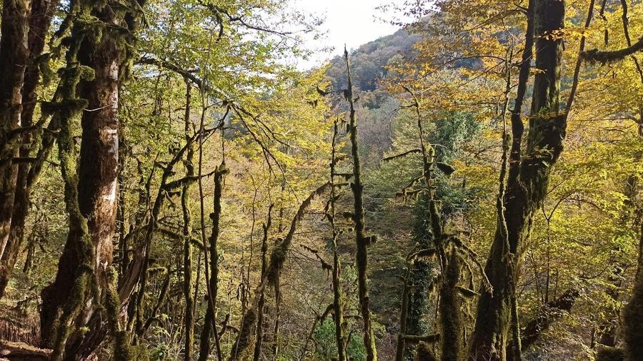 Самшитовый лес