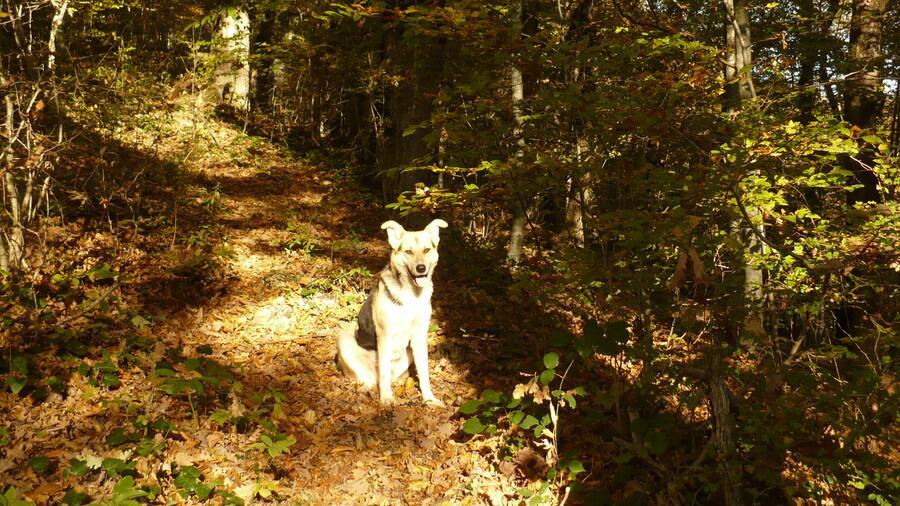 пёс из Ореховки