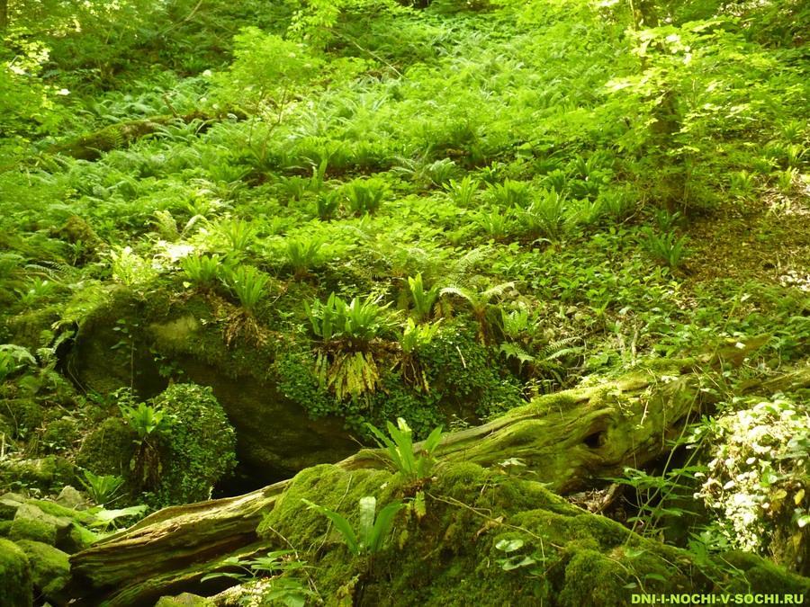 зелень субтропического леса