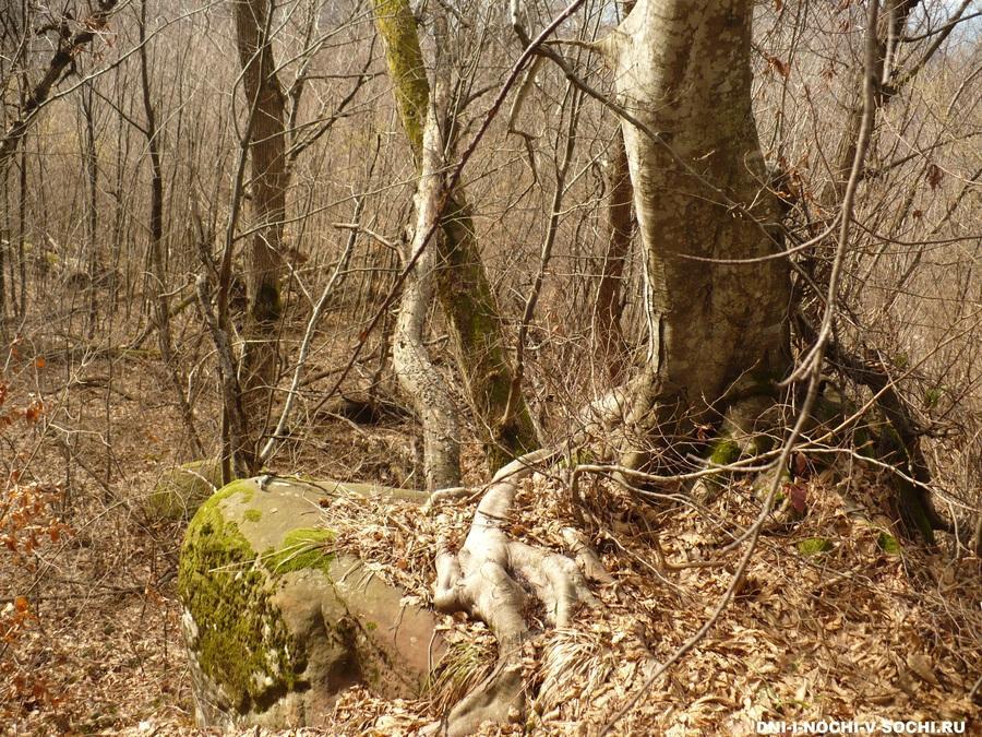 лес Лазаревского района