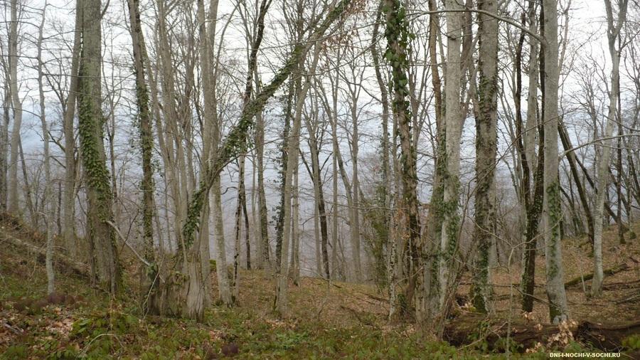 лес на горе Ахун