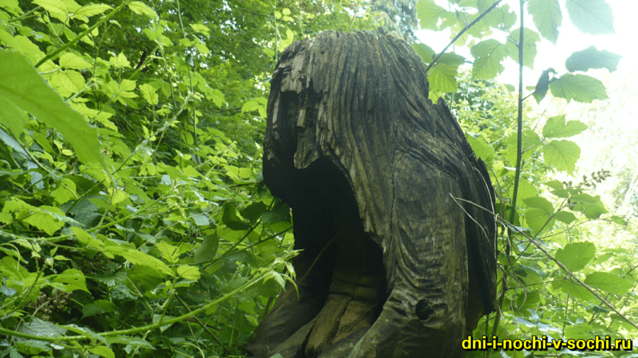 Мацестинский лесопарк фото