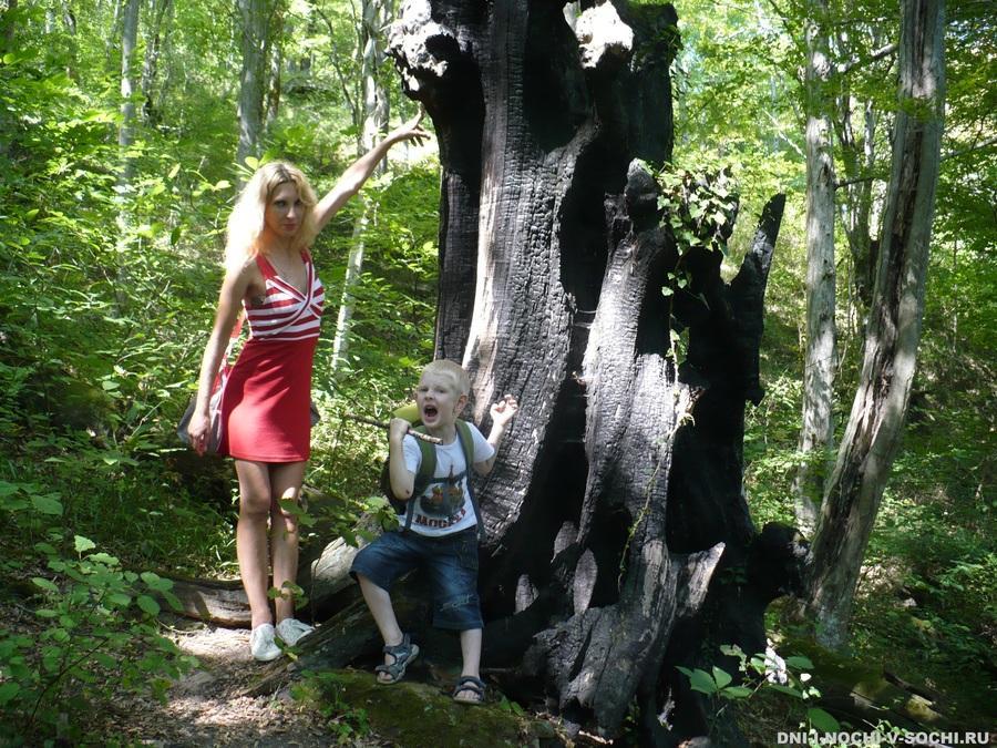 дерево возмездия