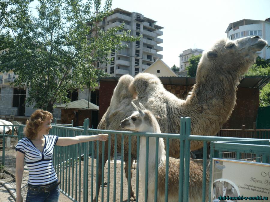 Зоопарк санатория Октябрьский