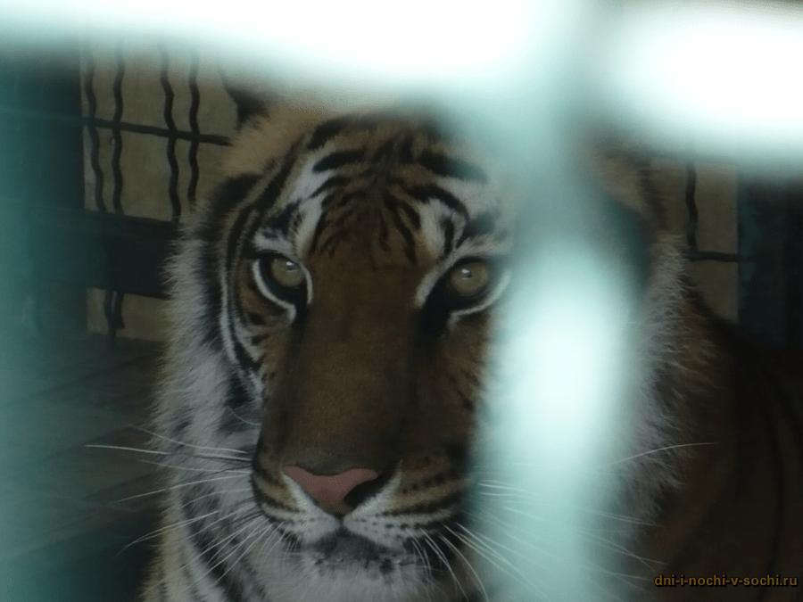Зоопарк санаторий Октябрьский картинки