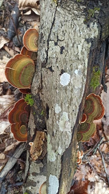 древесные грибы фото