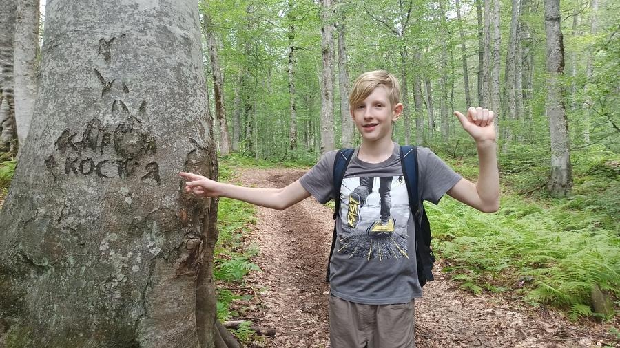 надписи на деревьях в лесу